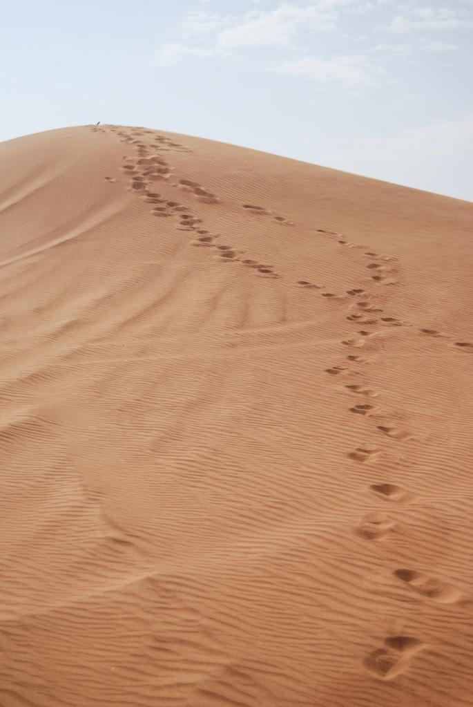 UAE: Desert Trip   Breezing Through